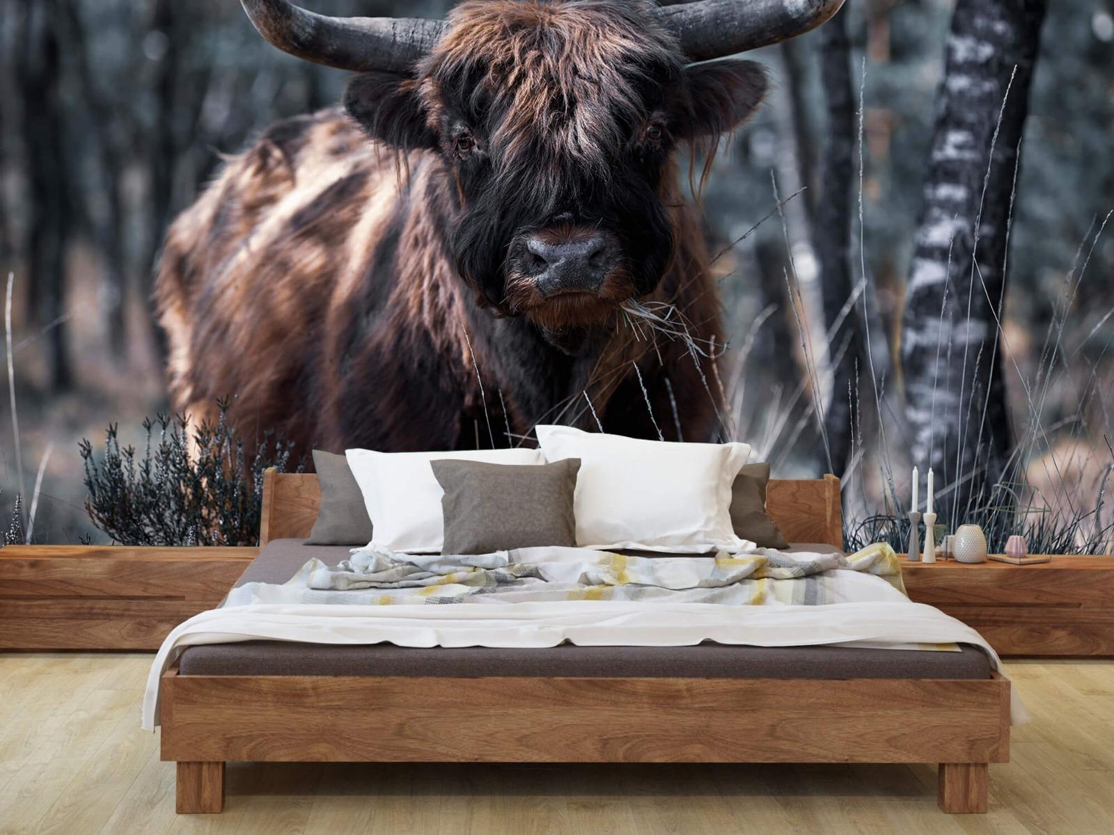 Hooglanders - Schotse hooglander - Woonkamer 7