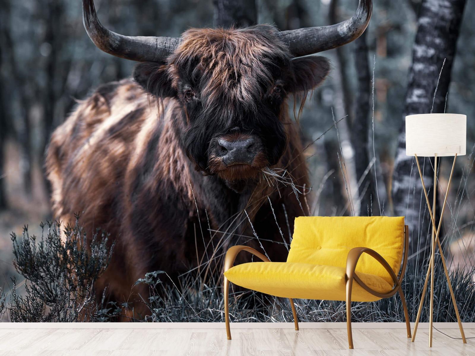 Hooglanders - Schotse hooglander - Woonkamer 10