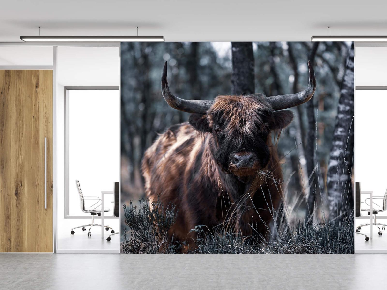 Hooglanders - Schotse hooglander - Woonkamer 11