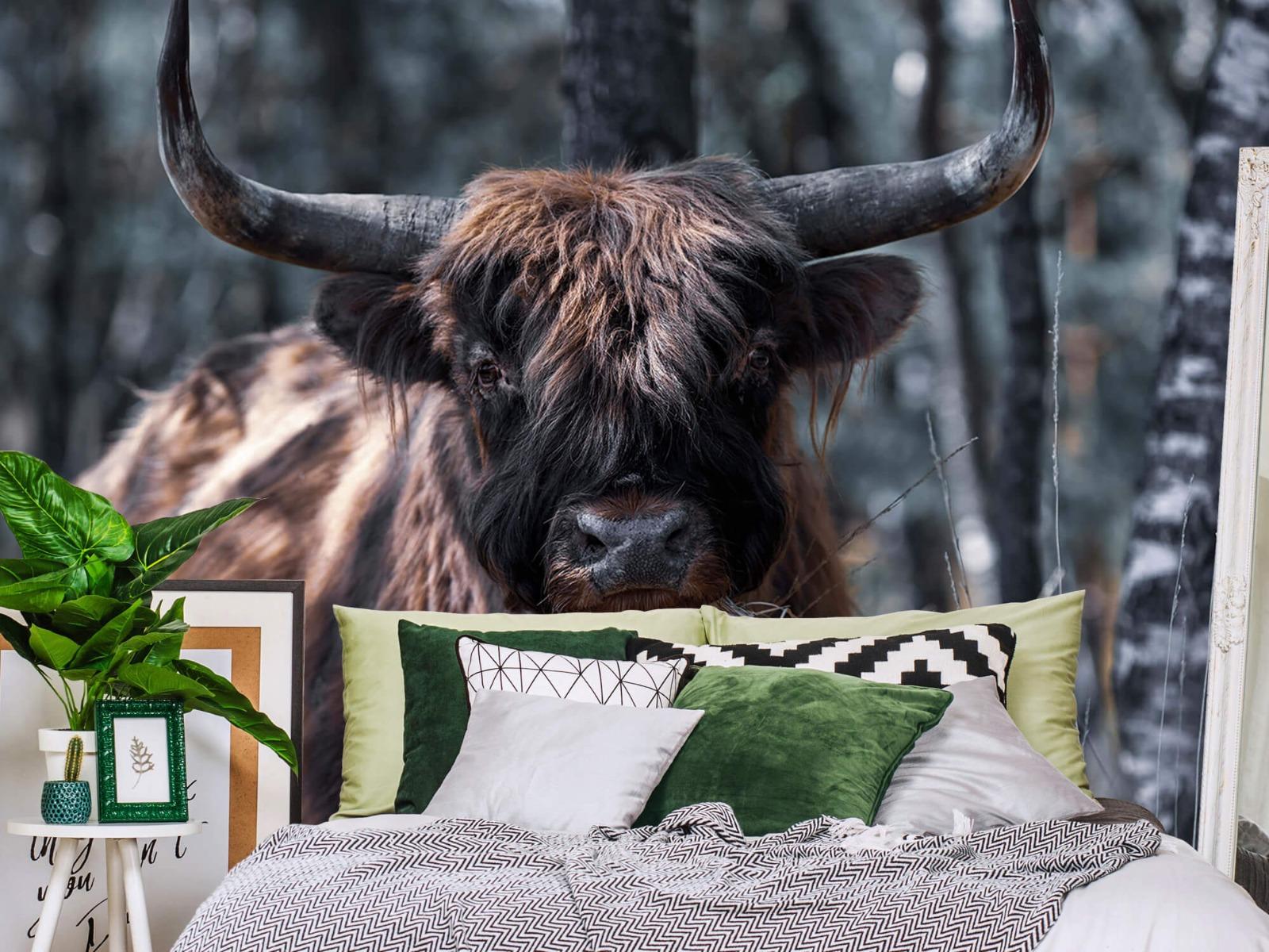 Hooglanders - Schotse hooglander - Woonkamer 12