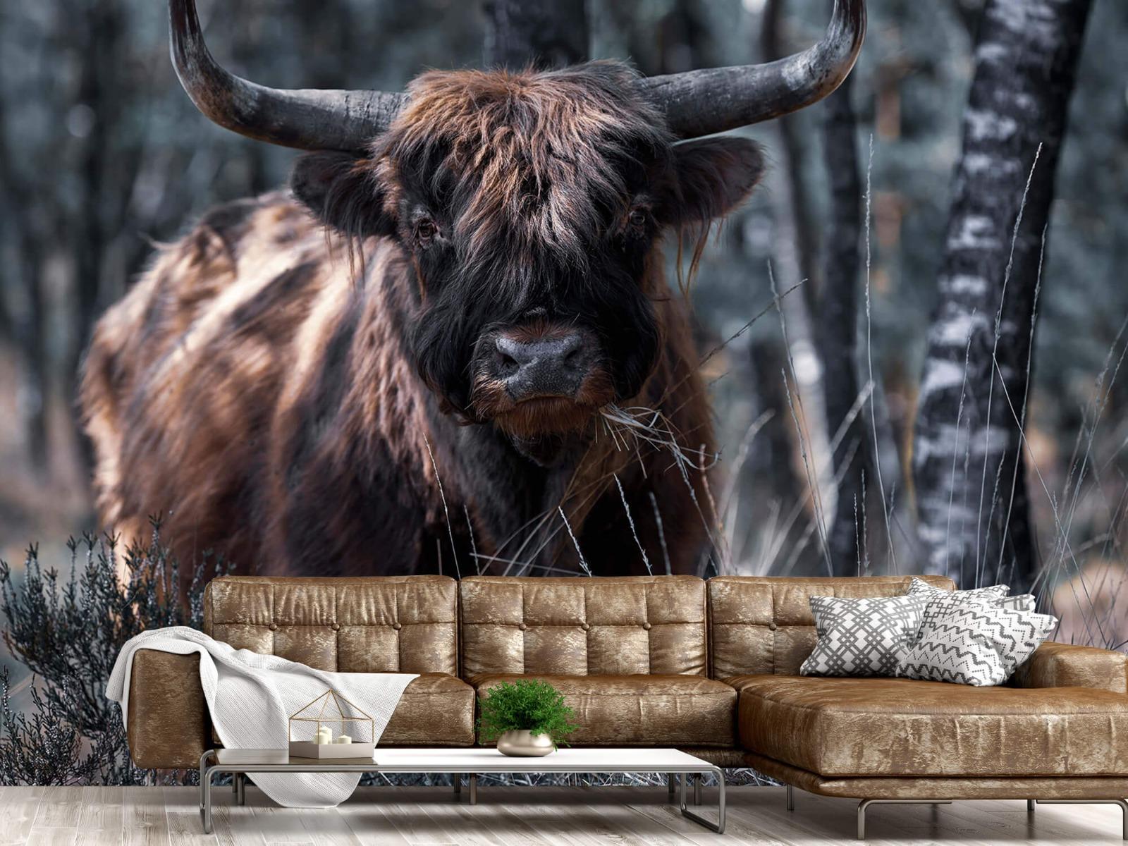 Hooglanders - Schotse hooglander - Woonkamer 14