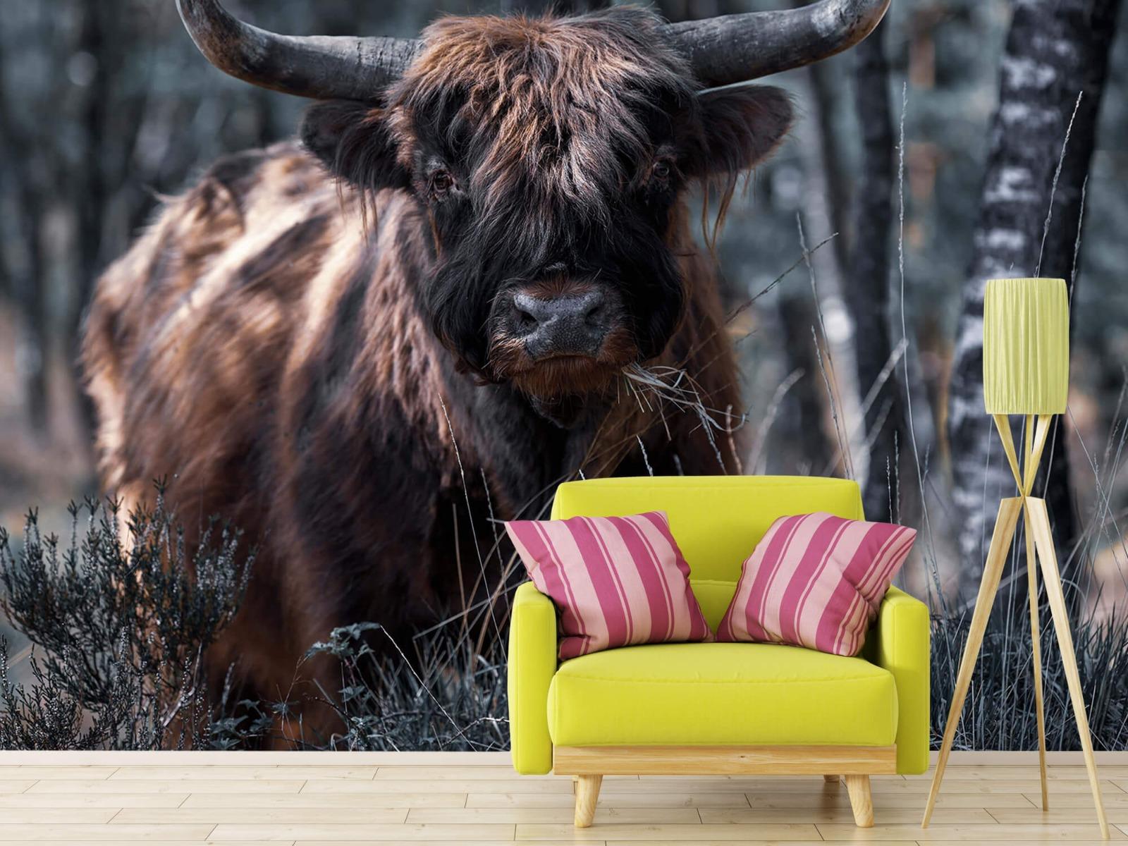 Hooglanders - Schotse hooglander - Woonkamer 17
