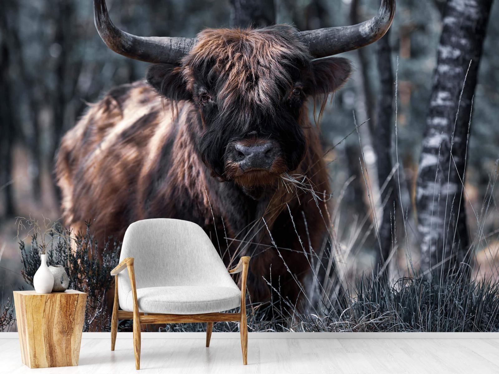 Hooglanders - Schotse hooglander - Woonkamer 18