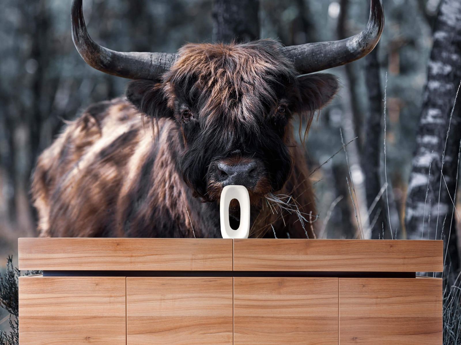 Hooglanders - Schotse hooglander - Woonkamer 20