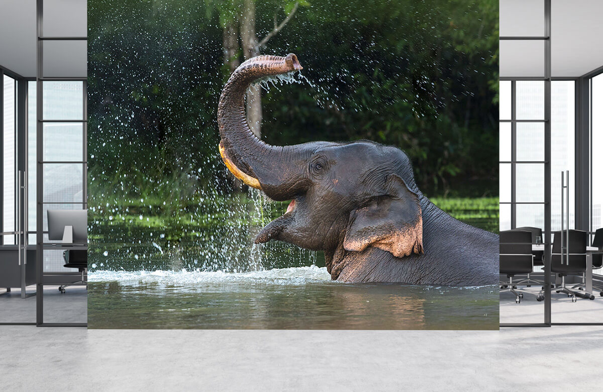 Jungle Olifant in water 4
