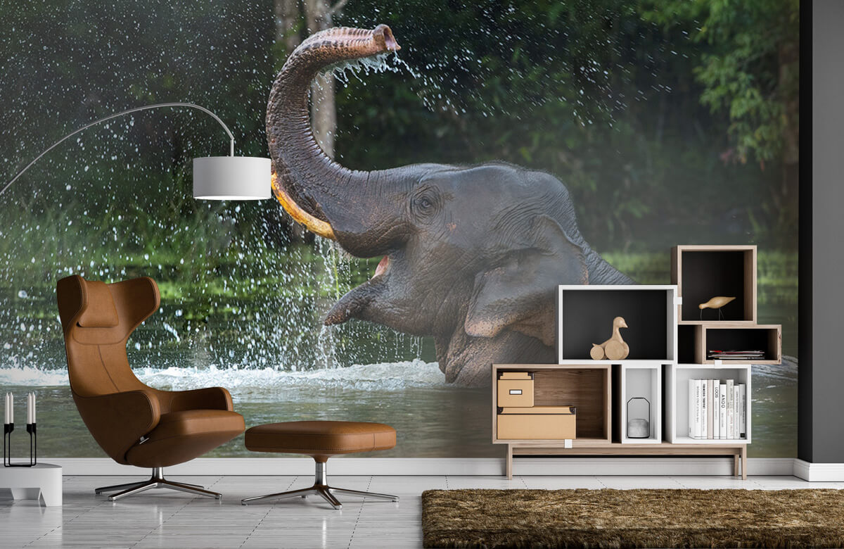 Jungle Olifant in water 5