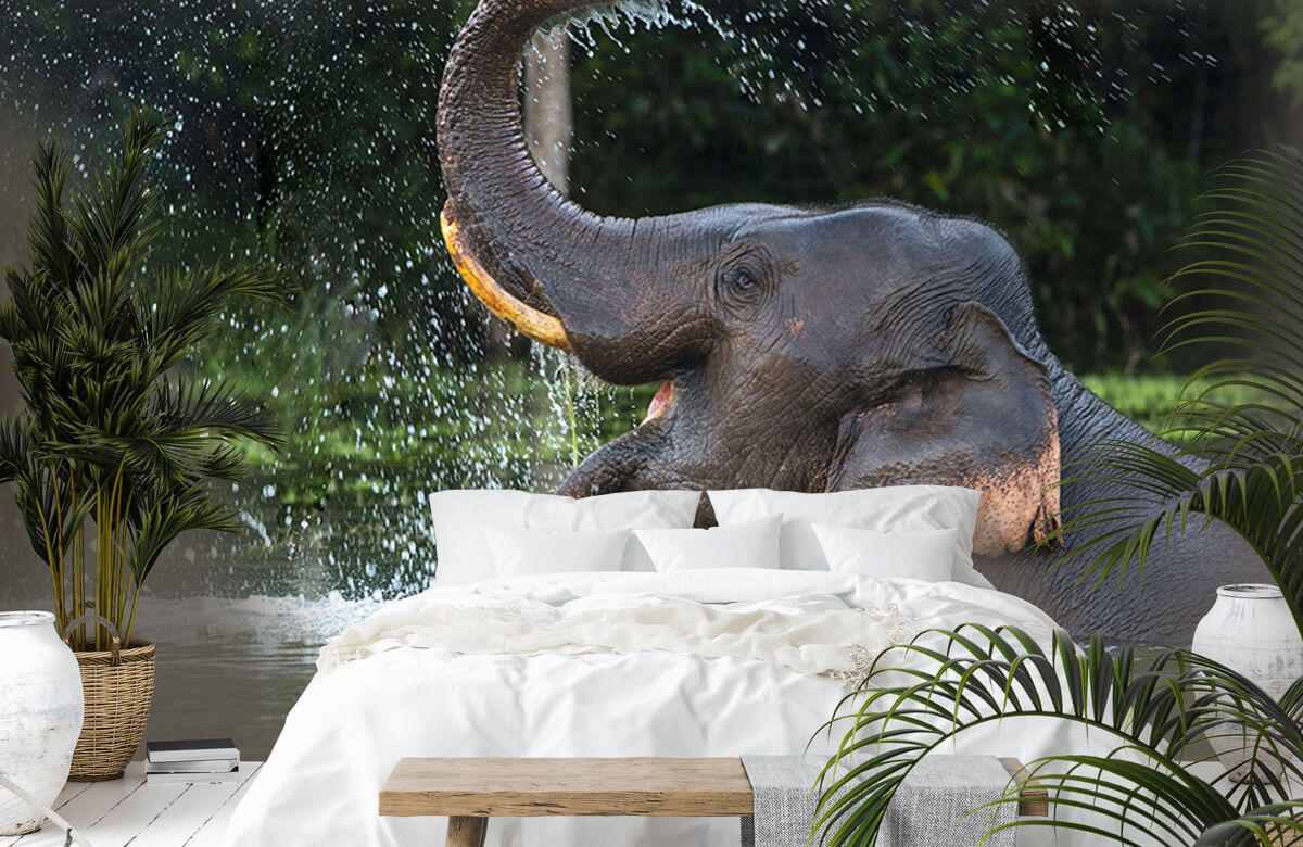 Jungle Olifant in water 1