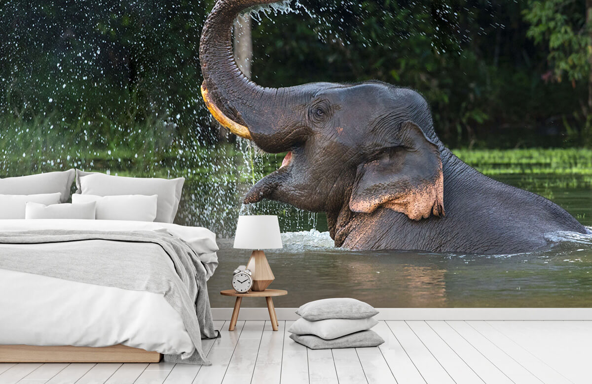 Jungle Olifant in water 7