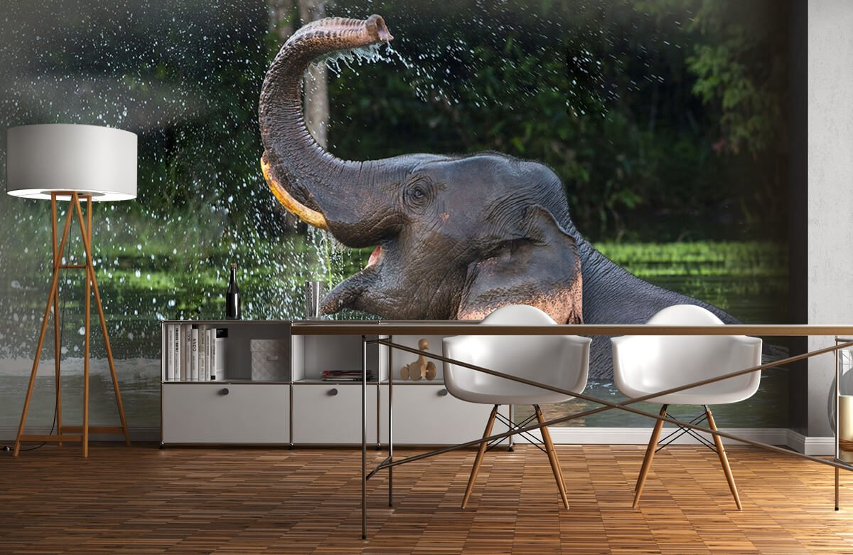 Jungle Olifant in water 11