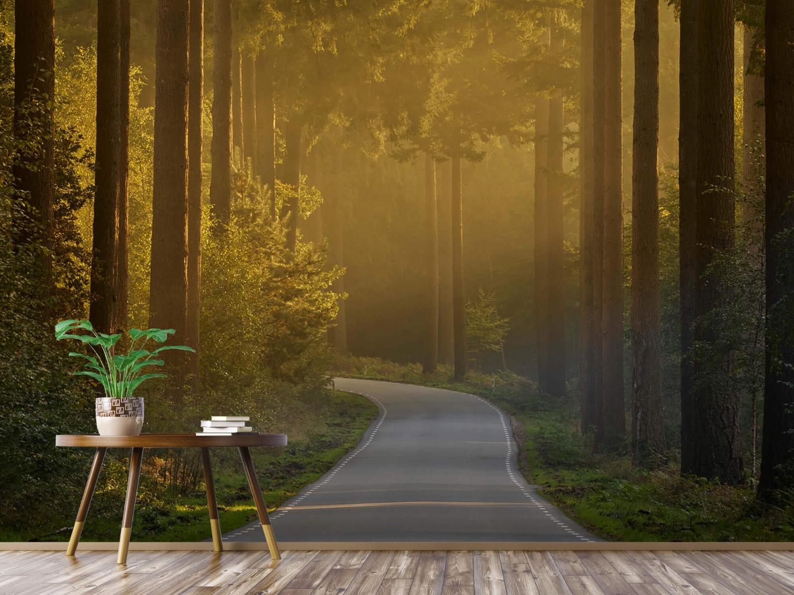 Natuur - Zonsopkomst bij weg door het bos 6