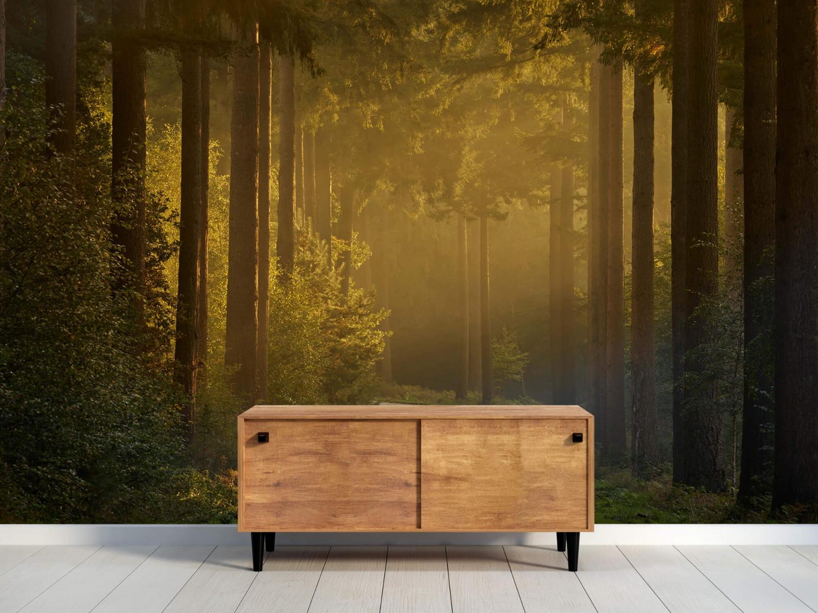 Natuur - Zonsopkomst bij weg door het bos 11