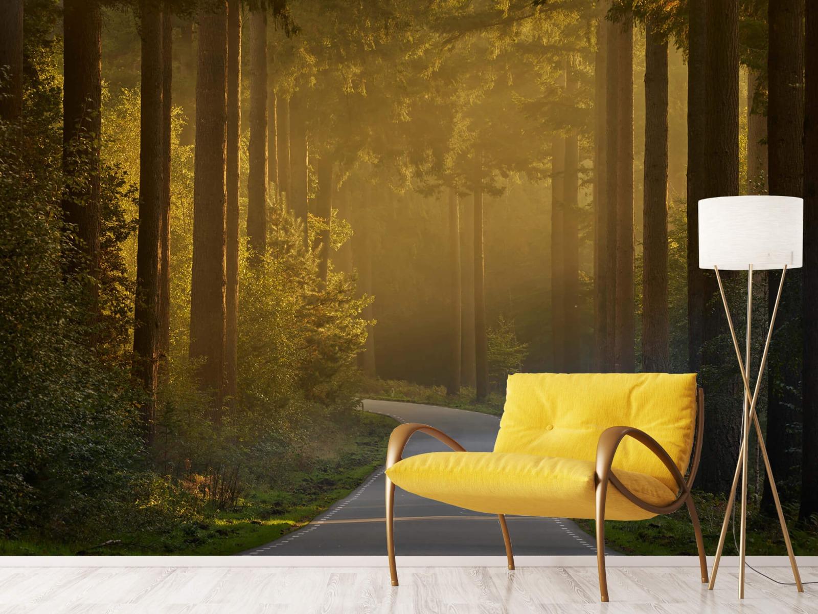 Natuur - Zonsopkomst bij weg door het bos 12