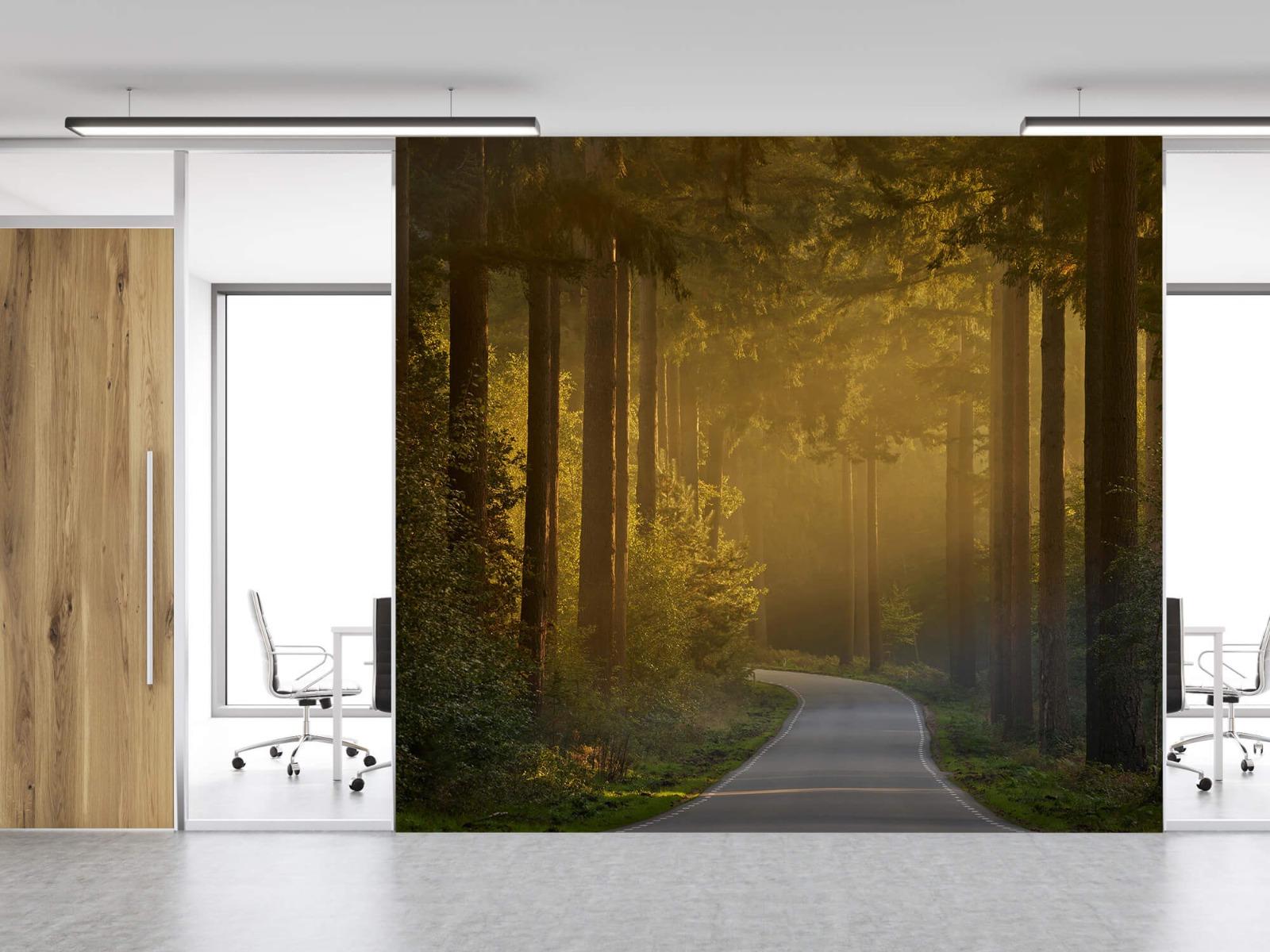Natuur - Zonsopkomst bij weg door het bos 13