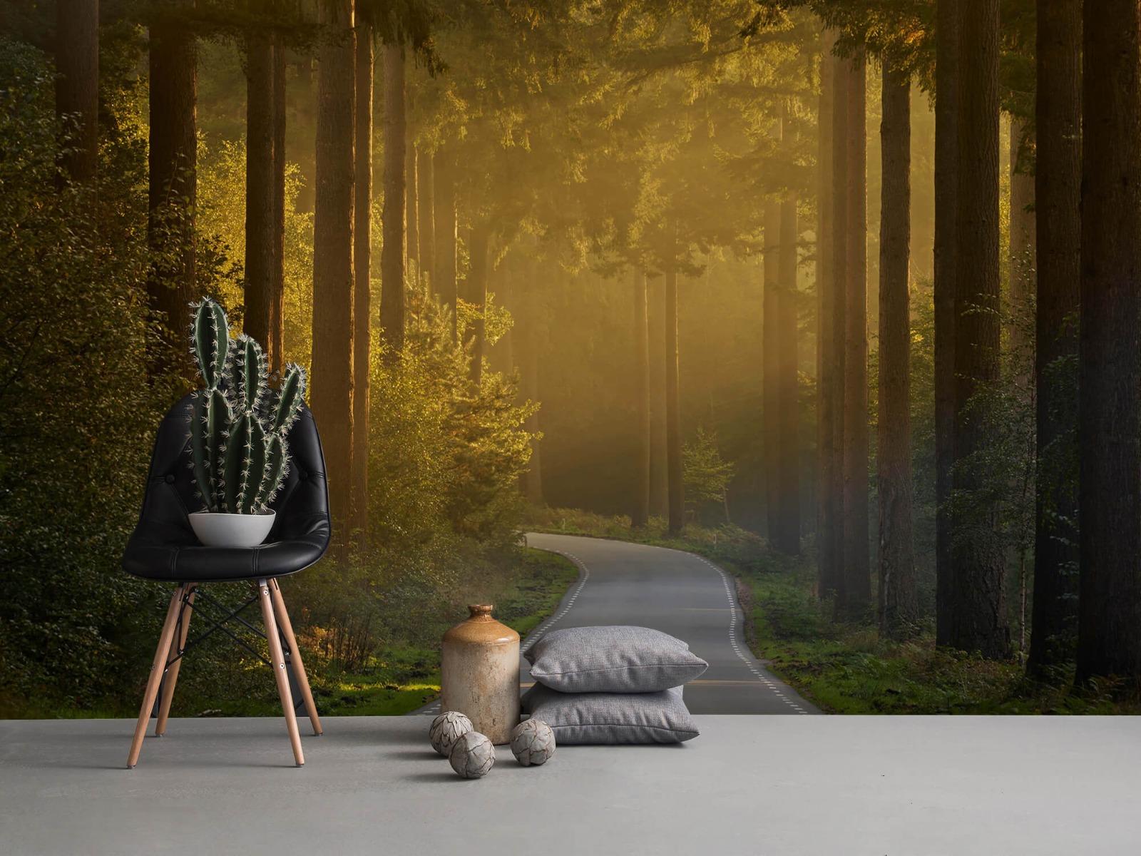 Natuur - Zonsopkomst bij weg door het bos 1