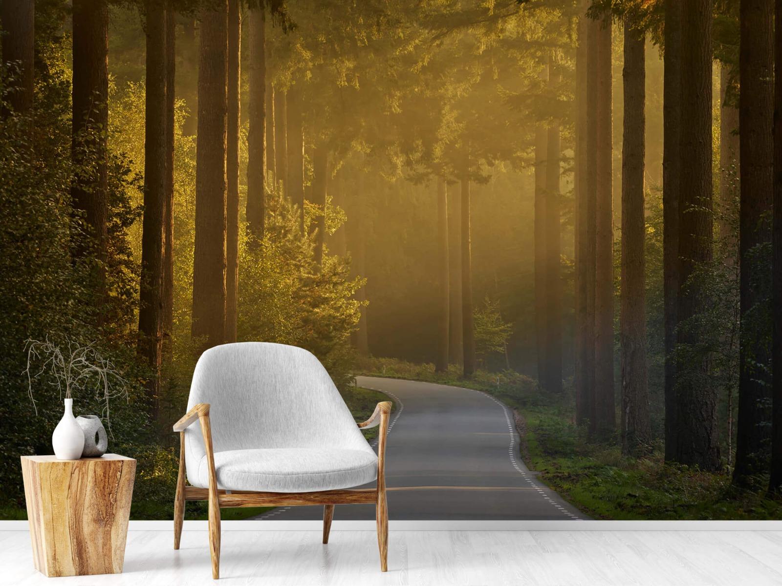Natuur - Zonsopkomst bij weg door het bos 2