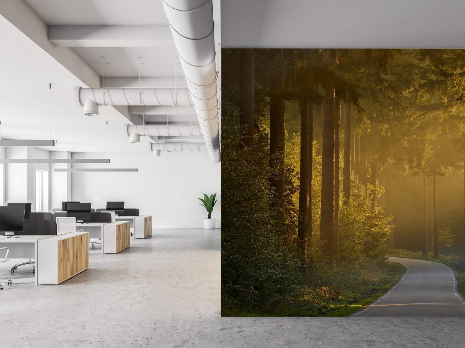 Natuur - Zonsopkomst bij weg door het bos 21