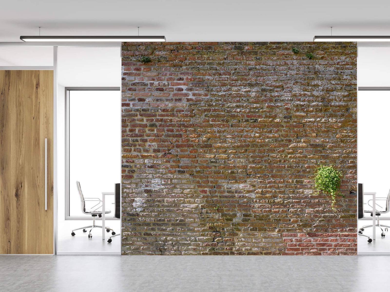 Stenen - Oude stenen stadsmuur met plantjes 11