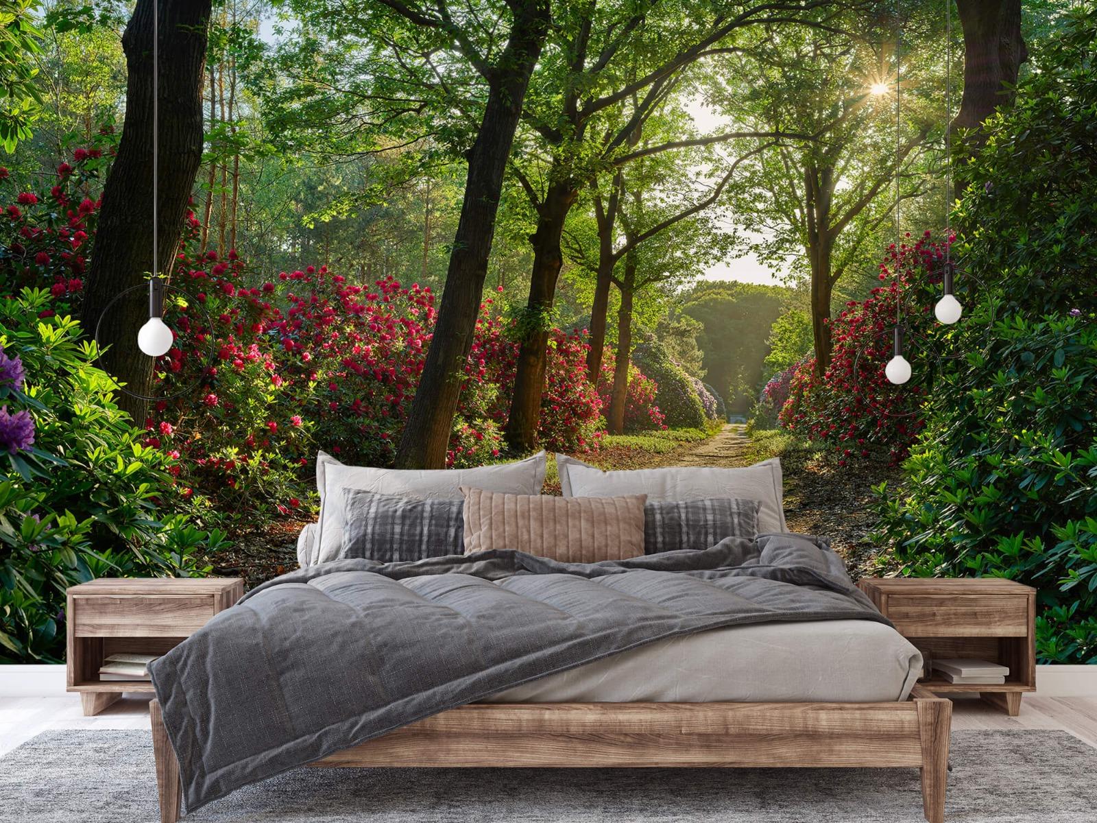 Bos - Zonsopkomst bij pad met rhododendrons 4