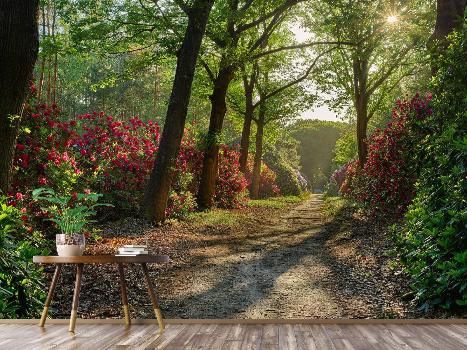 Bos - Zonsopkomst bij pad met rhododendrons 6
