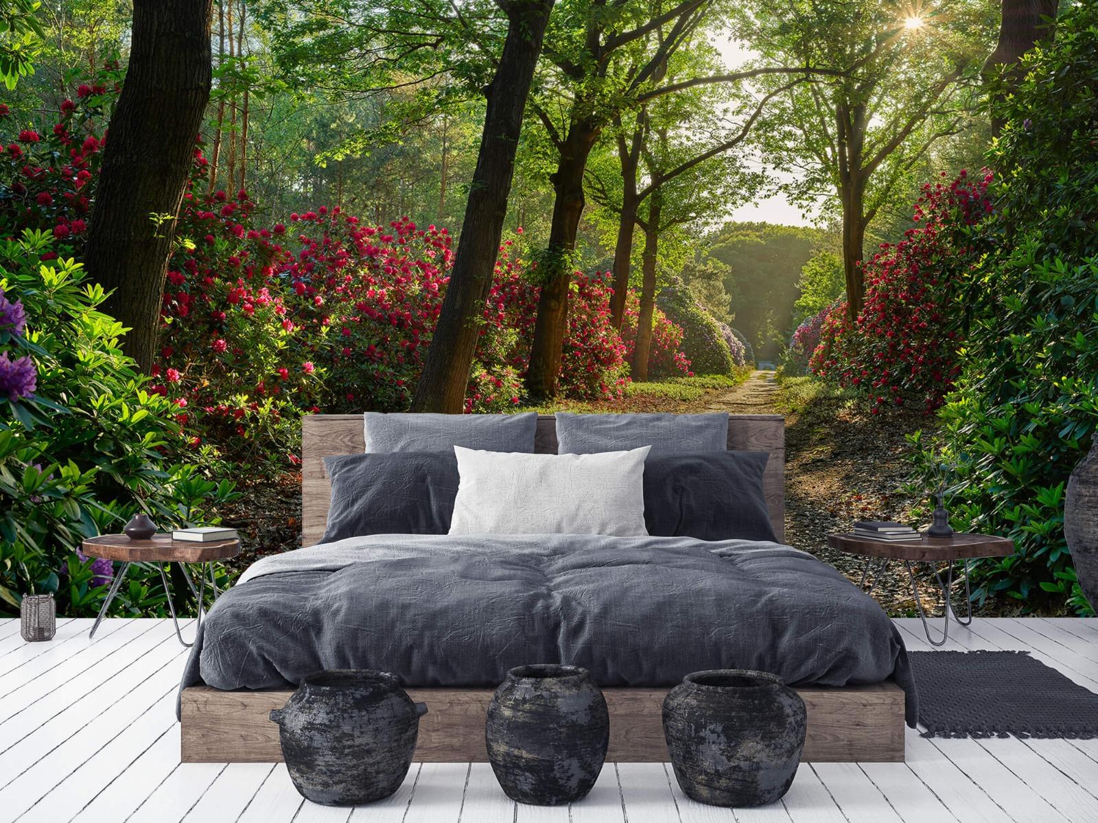 Bos - Zonsopkomst bij pad met rhododendrons 8