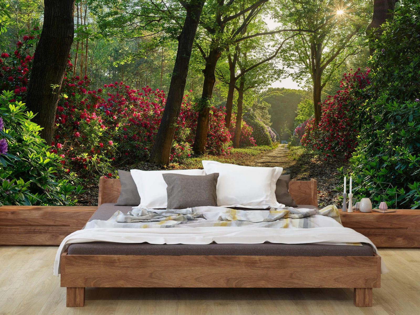 Bos - Zonsopkomst bij pad met rhododendrons 9