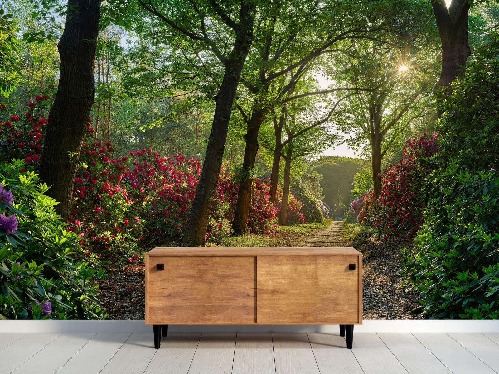 Bos - Zonsopkomst bij pad met rhododendrons 11