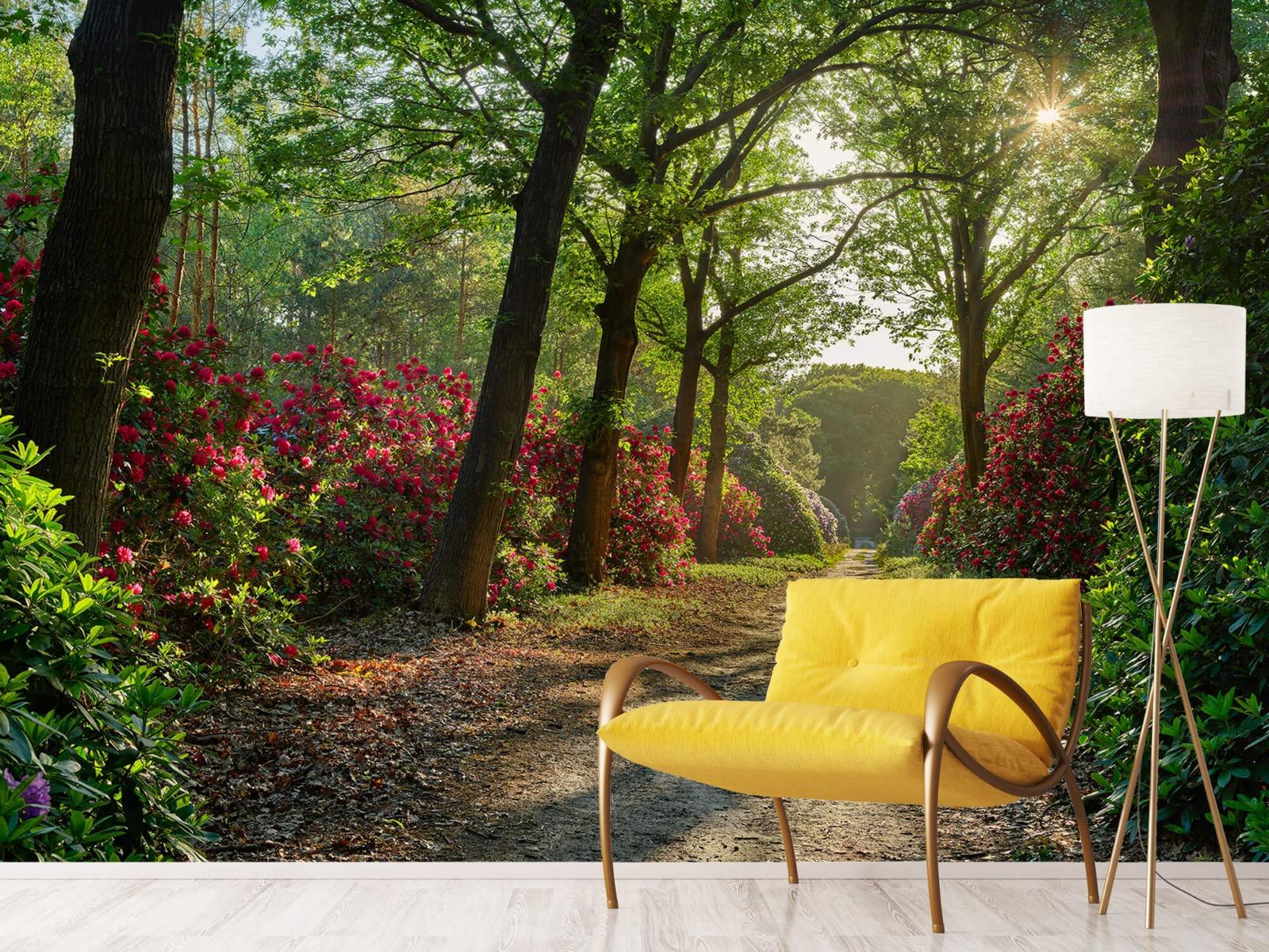 Bos - Zonsopkomst bij pad met rhododendrons 12