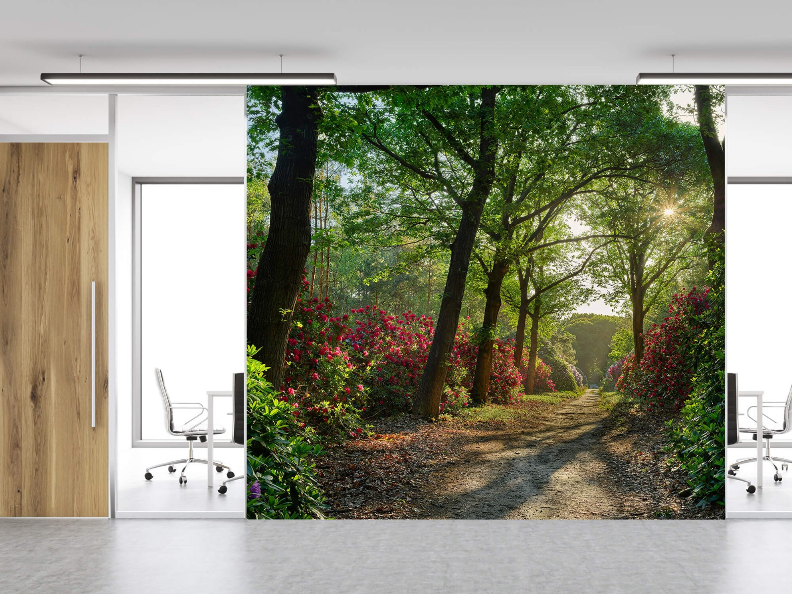 Bos - Zonsopkomst bij pad met rhododendrons 2