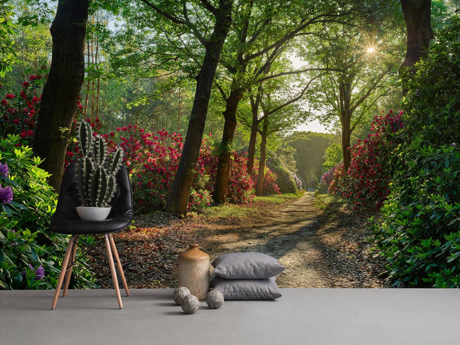 Bos - Zonsopkomst bij pad met rhododendrons 1