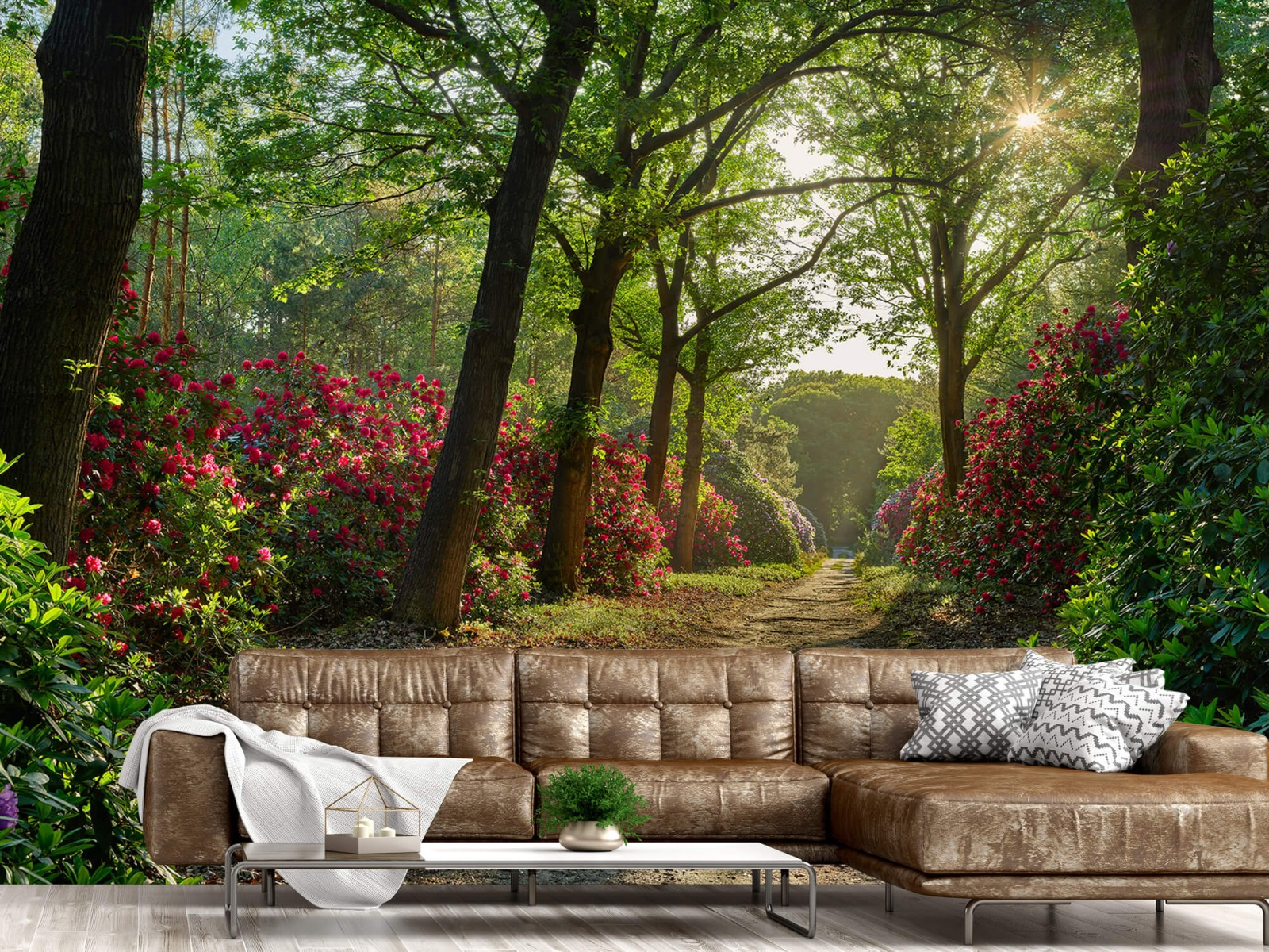 Bos - Zonsopkomst bij pad met rhododendrons 14