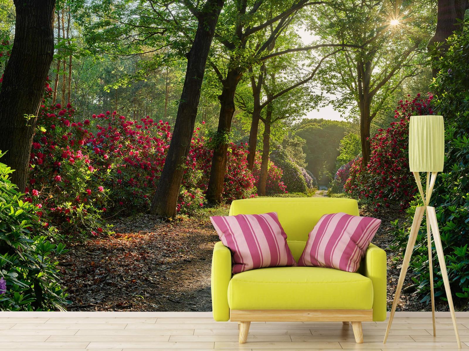 Bos - Zonsopkomst bij pad met rhododendrons 17