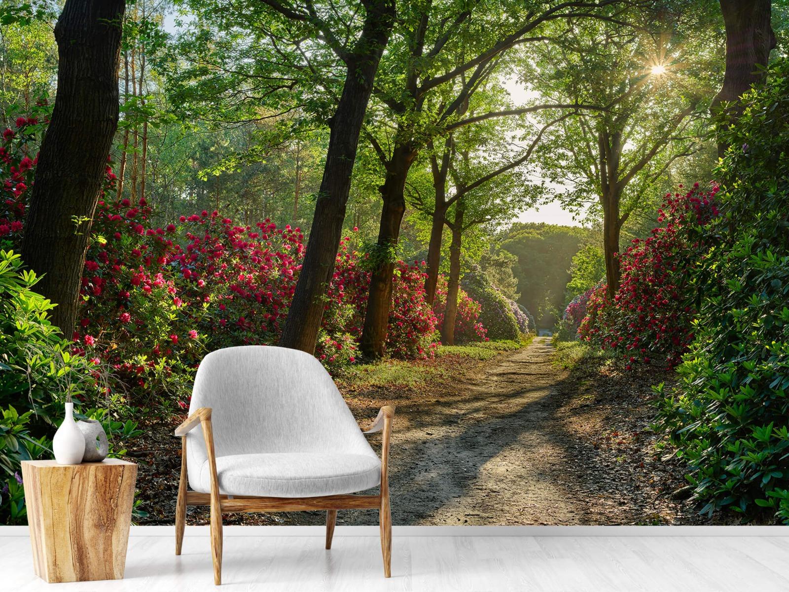 Bos - Zonsopkomst bij pad met rhododendrons 18