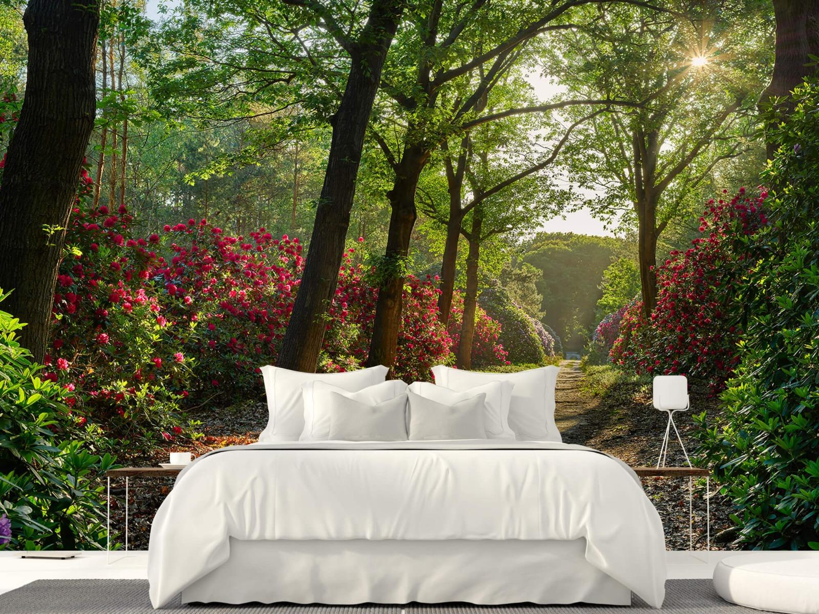 Bos - Zonsopkomst bij pad met rhododendrons 23