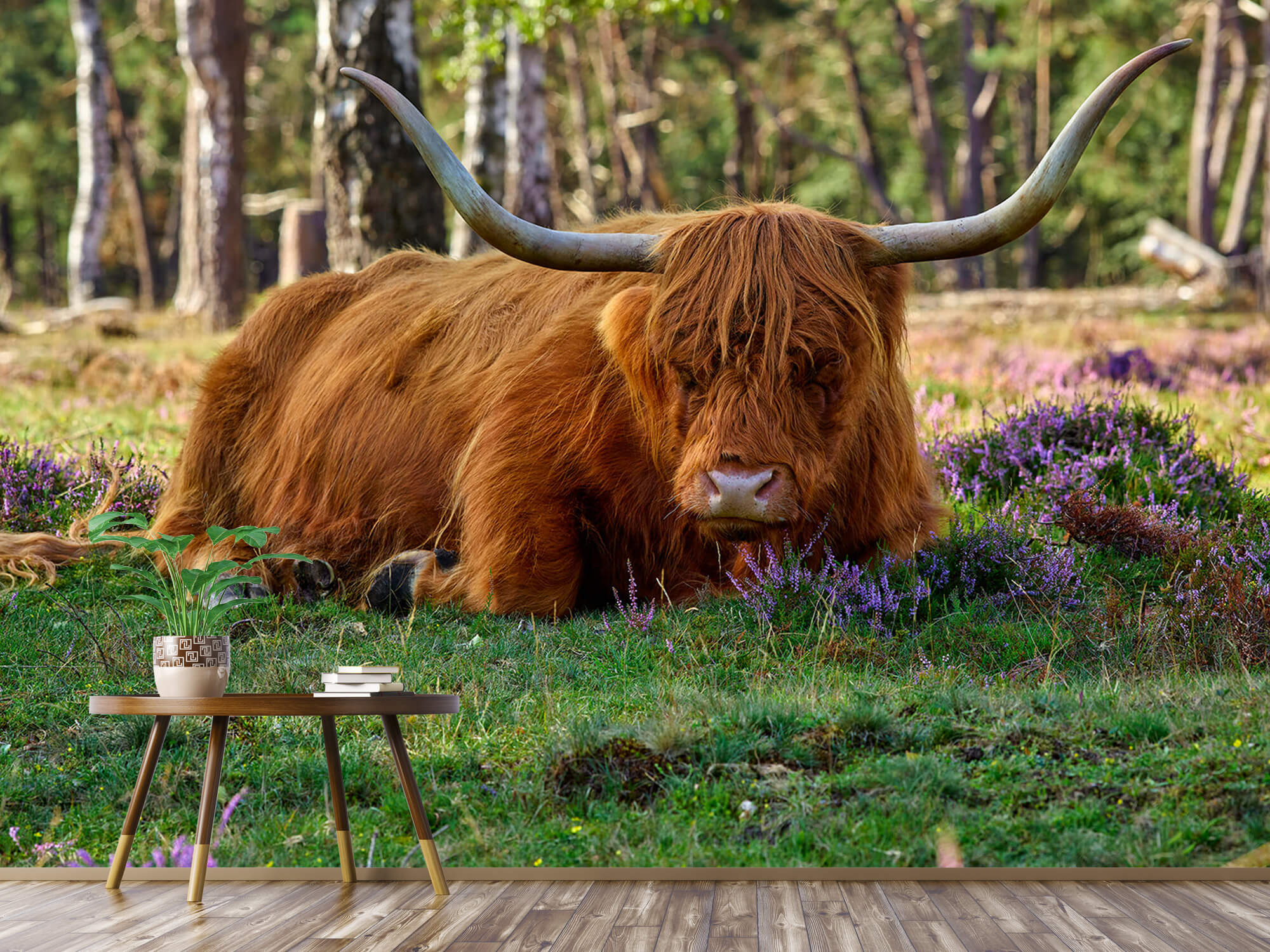 Hooglanders - Rustende Schotse hooglander 4