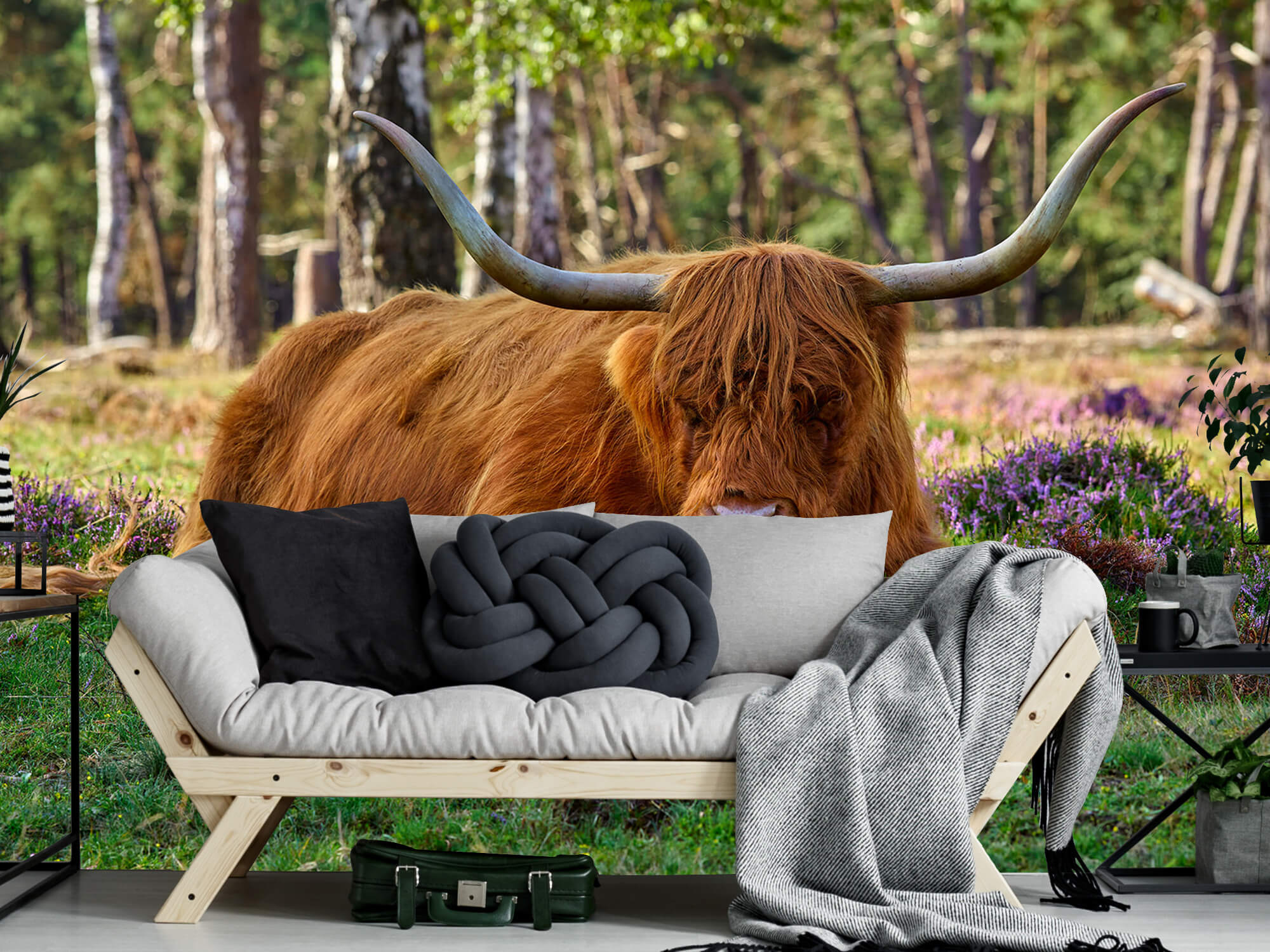 Hooglanders - Rustende Schotse hooglander 7