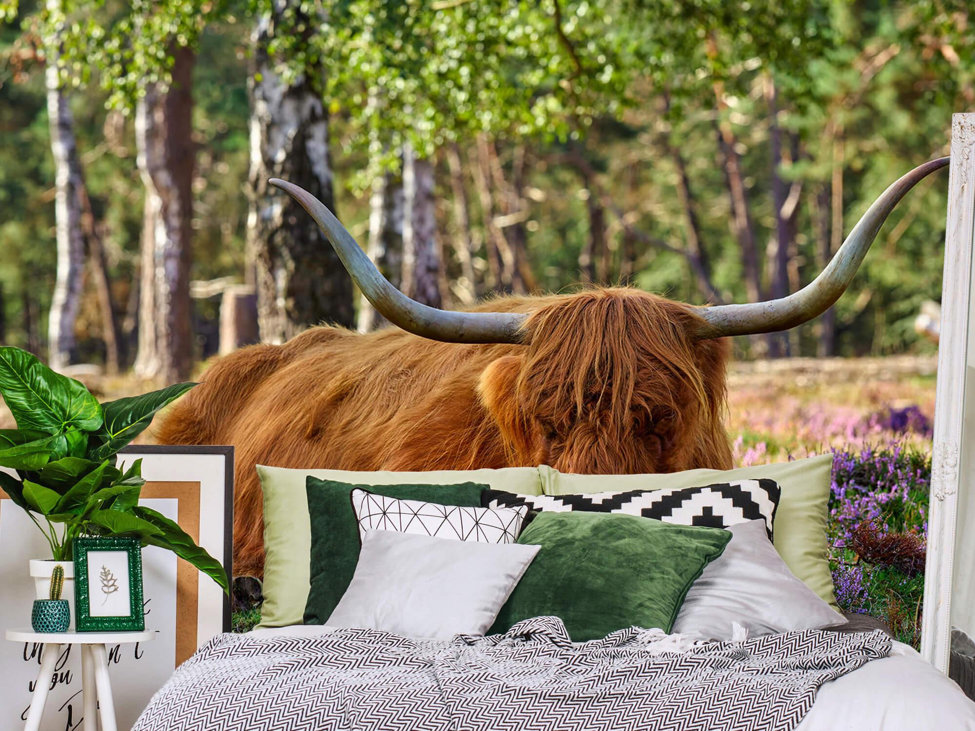 Hooglanders - Rustende Schotse hooglander 12