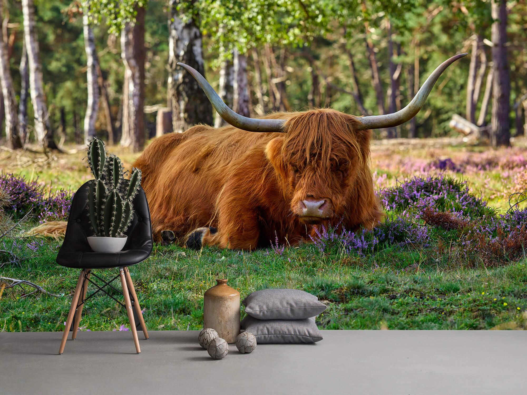 Hooglanders - Rustende Schotse hooglander 13