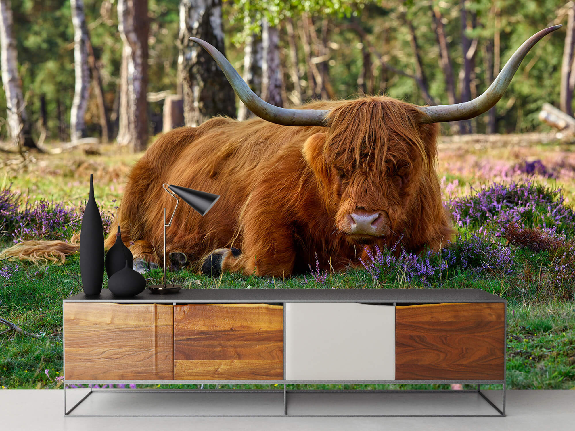 Hooglanders - Rustende Schotse hooglander 16