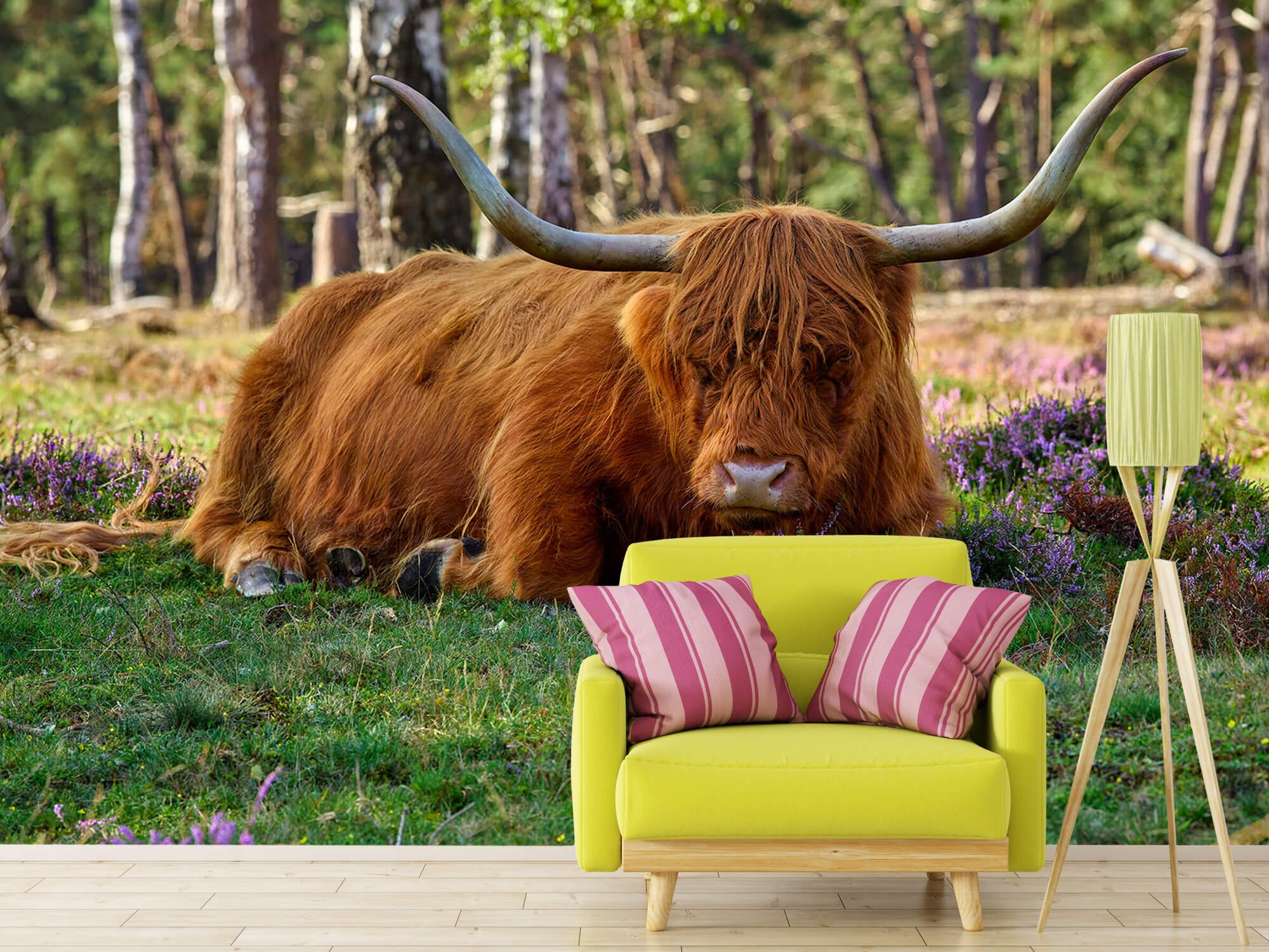 Hooglanders - Rustende Schotse hooglander 17
