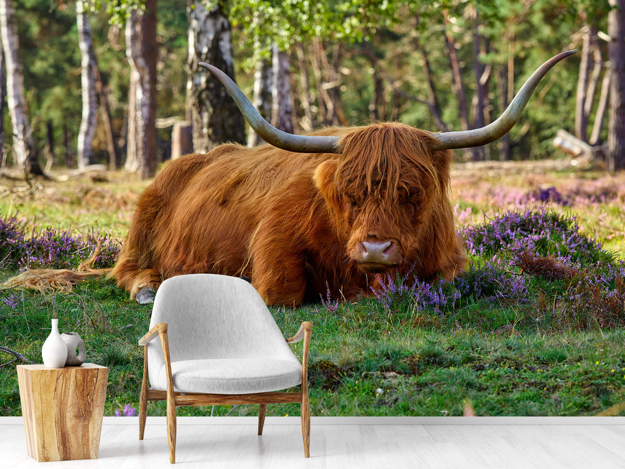 Hooglanders - Rustende Schotse hooglander 18