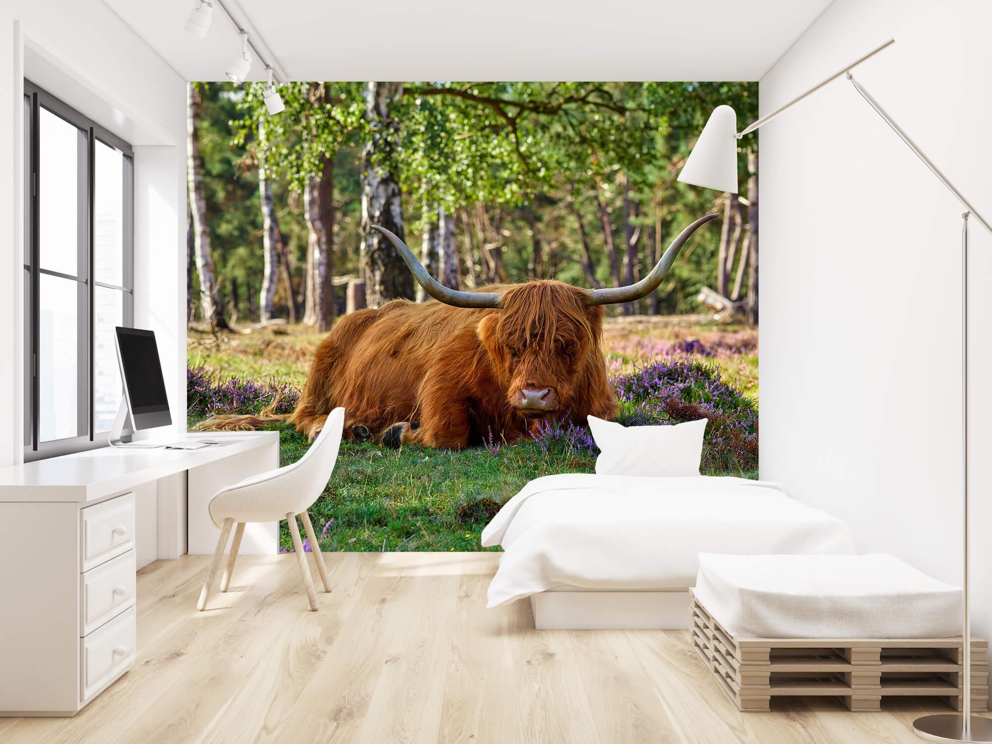 Hooglanders - Rustende Schotse hooglander 22