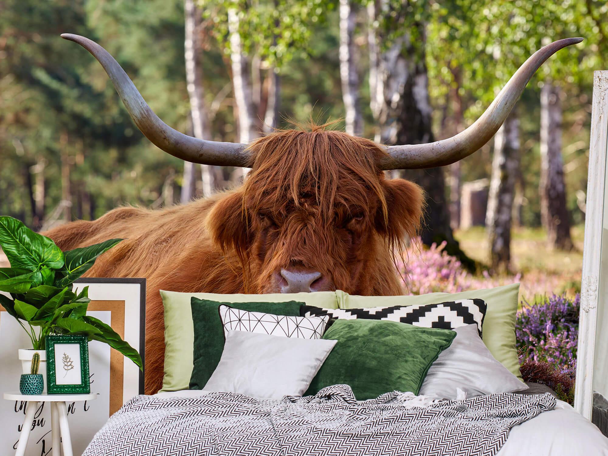 Hooglanders - Liggende Schotse hooglander 12