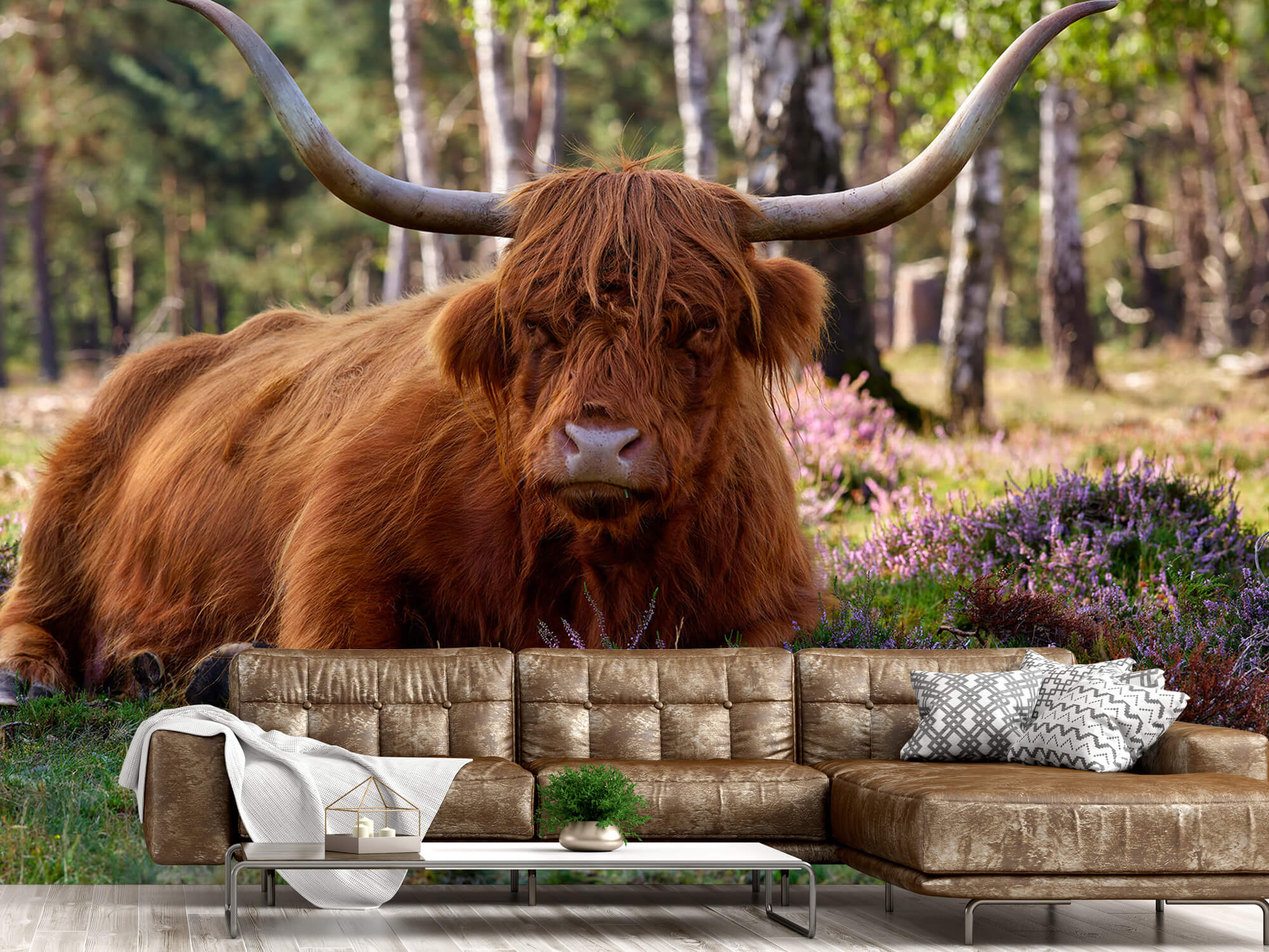 Hooglanders - Liggende Schotse hooglander 14