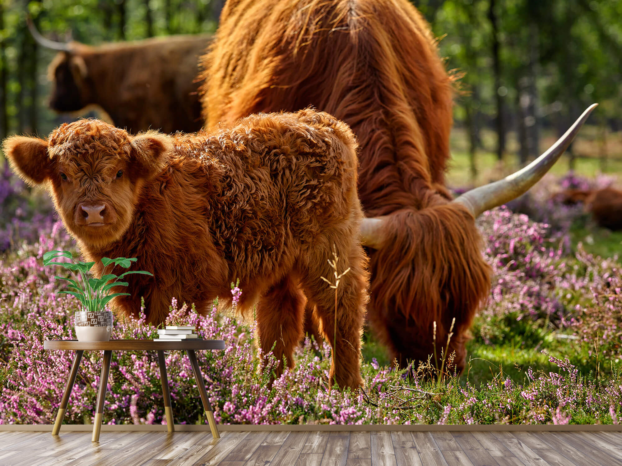 Hooglanders - Familie Schotse hooglanders 4