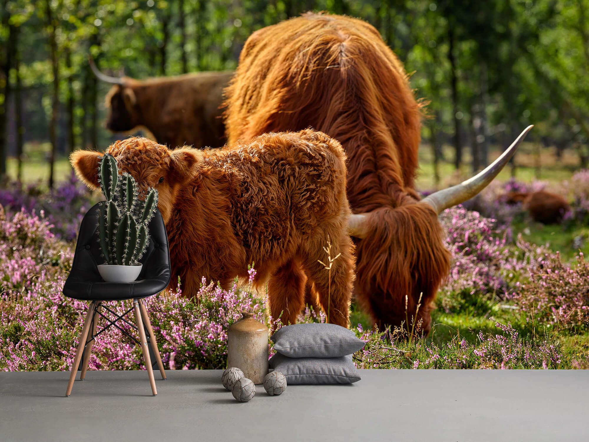 Hooglanders - Familie Schotse hooglanders 14