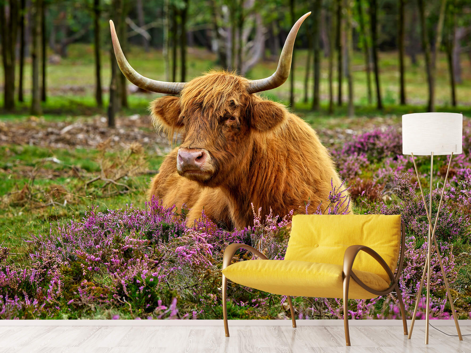Hooglanders - Schotse hooglander tussen paarse heide 10
