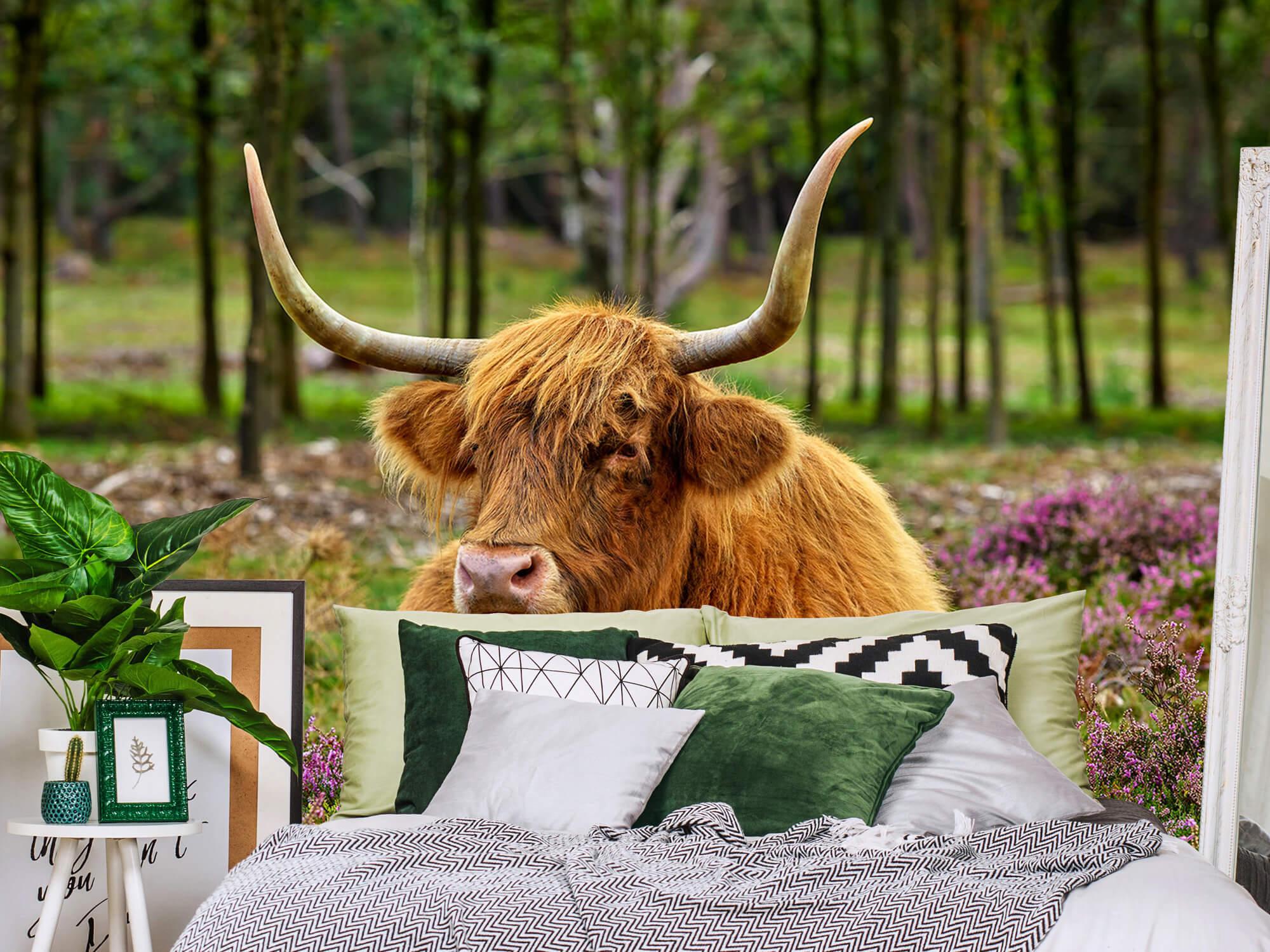 Hooglanders - Schotse hooglander tussen paarse heide 12