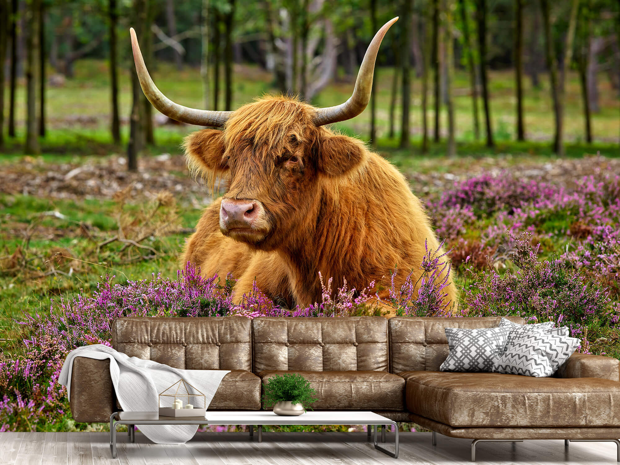 Hooglanders - Schotse hooglander tussen paarse heide 14