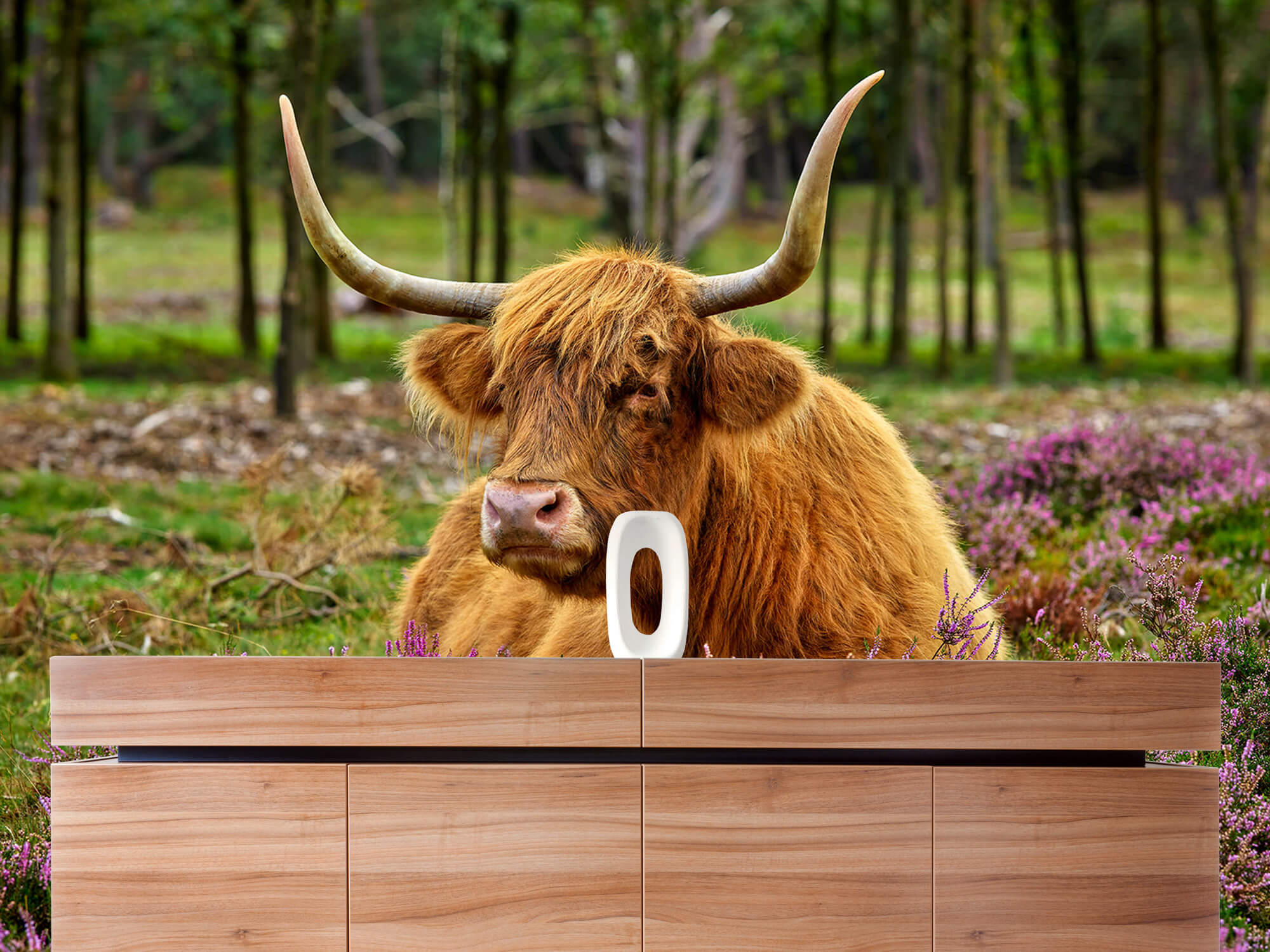 Hooglanders - Schotse hooglander tussen paarse heide 20