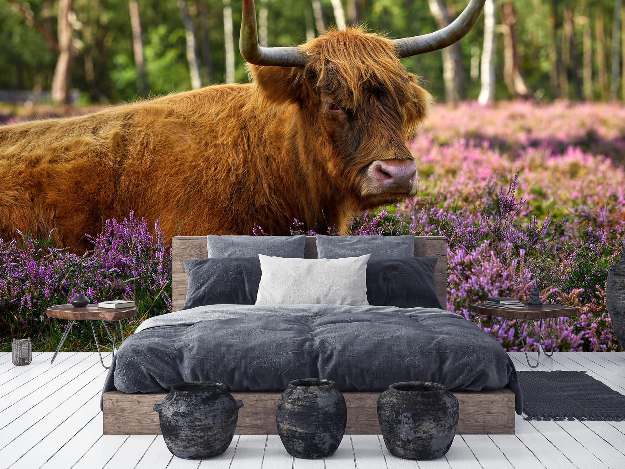 Hooglanders - Stoere Schotse hooglander 1
